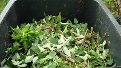 Avfallshink med växtavfall